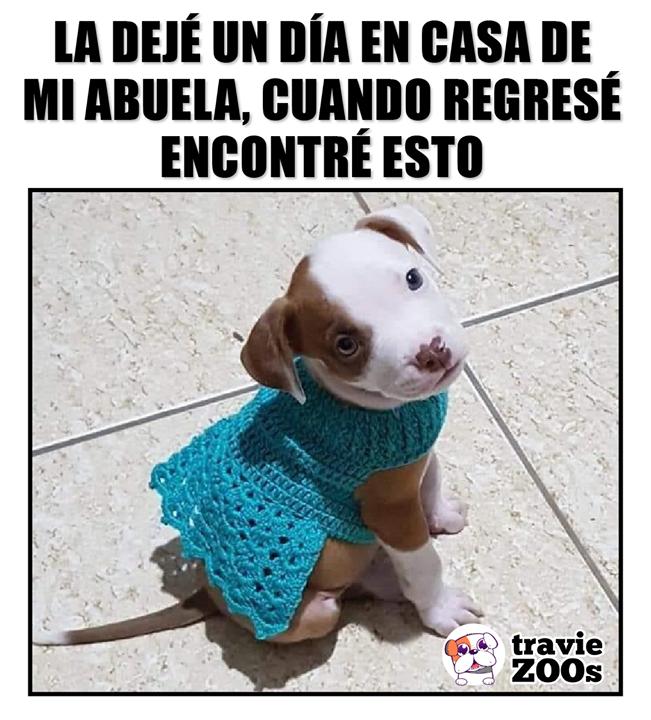 Y Mas Cuando Hace Frio Dale Like Y Comparte Si Tienes Un Peludo Consentido Memes Divertidos Perros Divertido