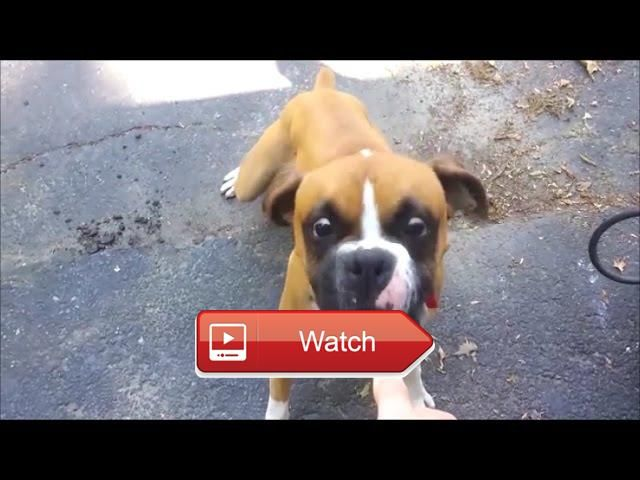Dumb Dogs Funny Dog Clips And Fails Dumb Dogs Funny Dogs Dog