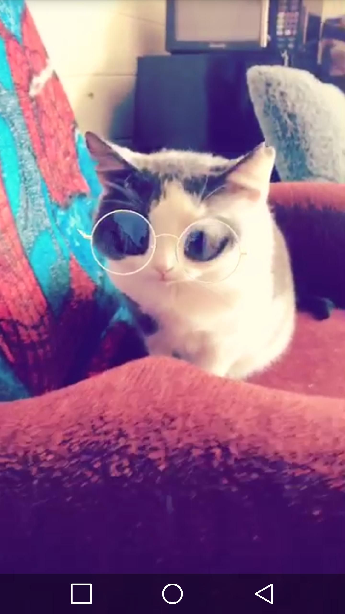 http//ift.tt/2f1l4HS sister's cat with a Snapchat filter