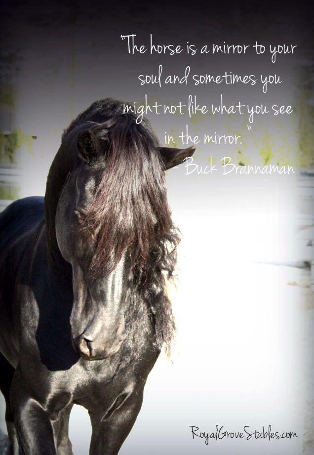 A horse quote | Horses | Horse quotes, Horses, Equine quotes