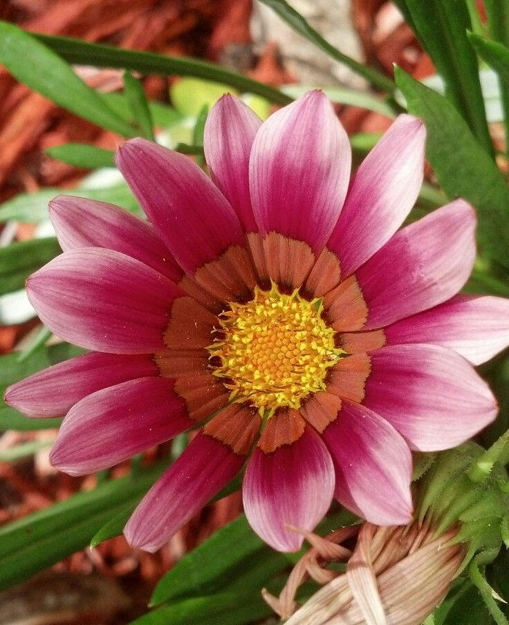 Florida full sun flower | Plants, Garden, Florida