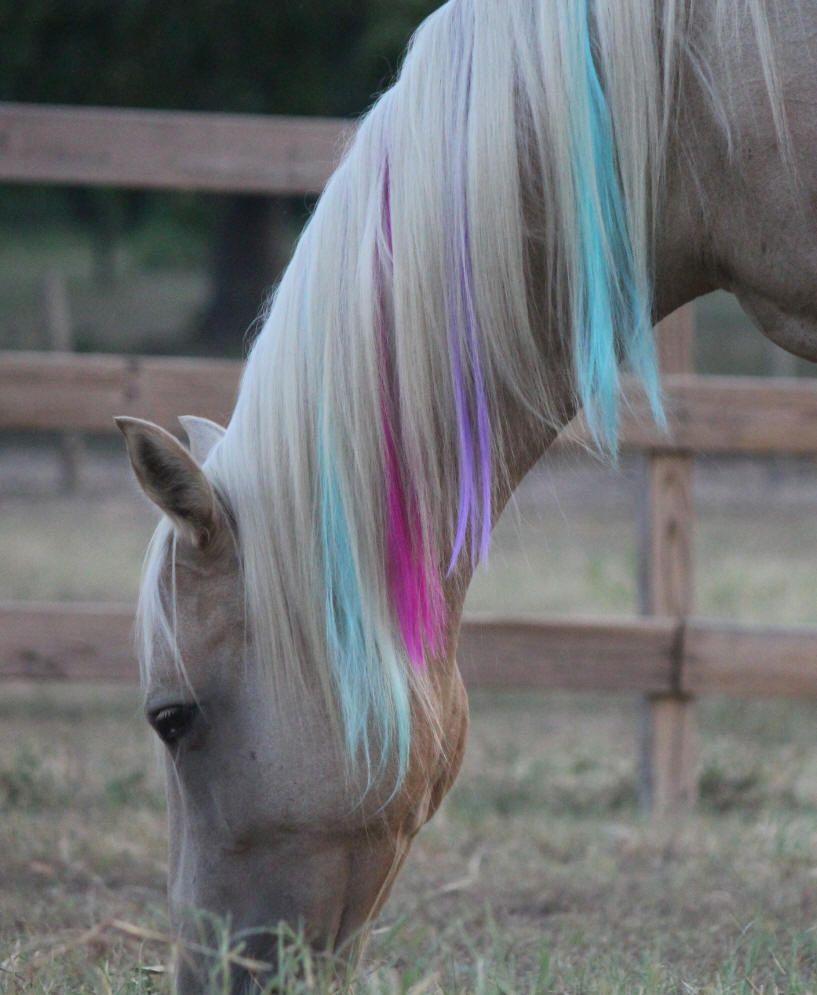 Horse Hair Animal Hair Pinterest Horse Horse Mane And Horse
