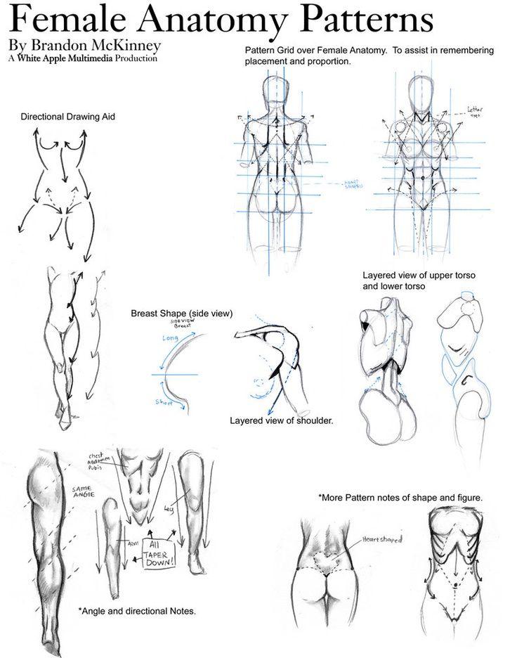 Gráficos que muestran como dibujar partes del cuerpo y otros ...