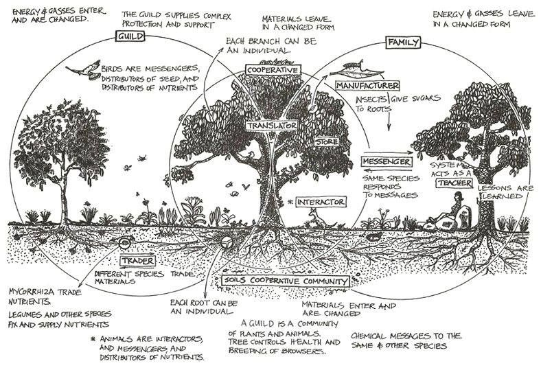 Bill Mollison- Permaculture, A Designers' Manual ...