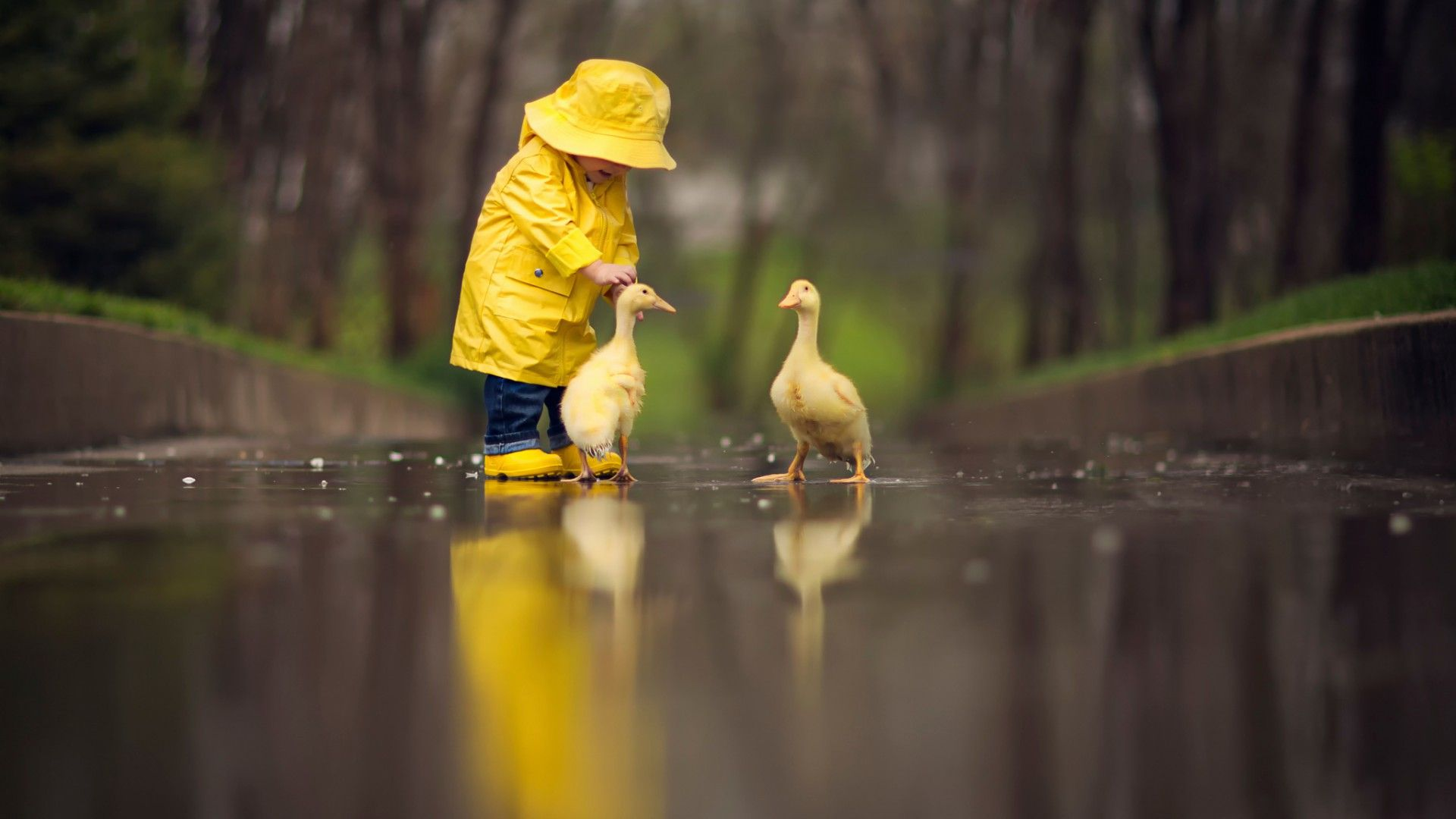 Small child with ducks [1920x1080] via Classy Bro | Cool Wallpapers ...