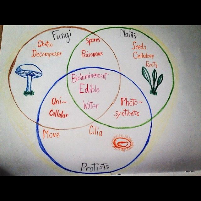 Venn Diagram Plants Yelomdiffusion