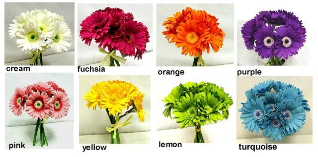 Gerbera Daisy Color Options Gerbera Daisy Wedding Gerbera Daisy Colors Gerbera Daisy Bouquet