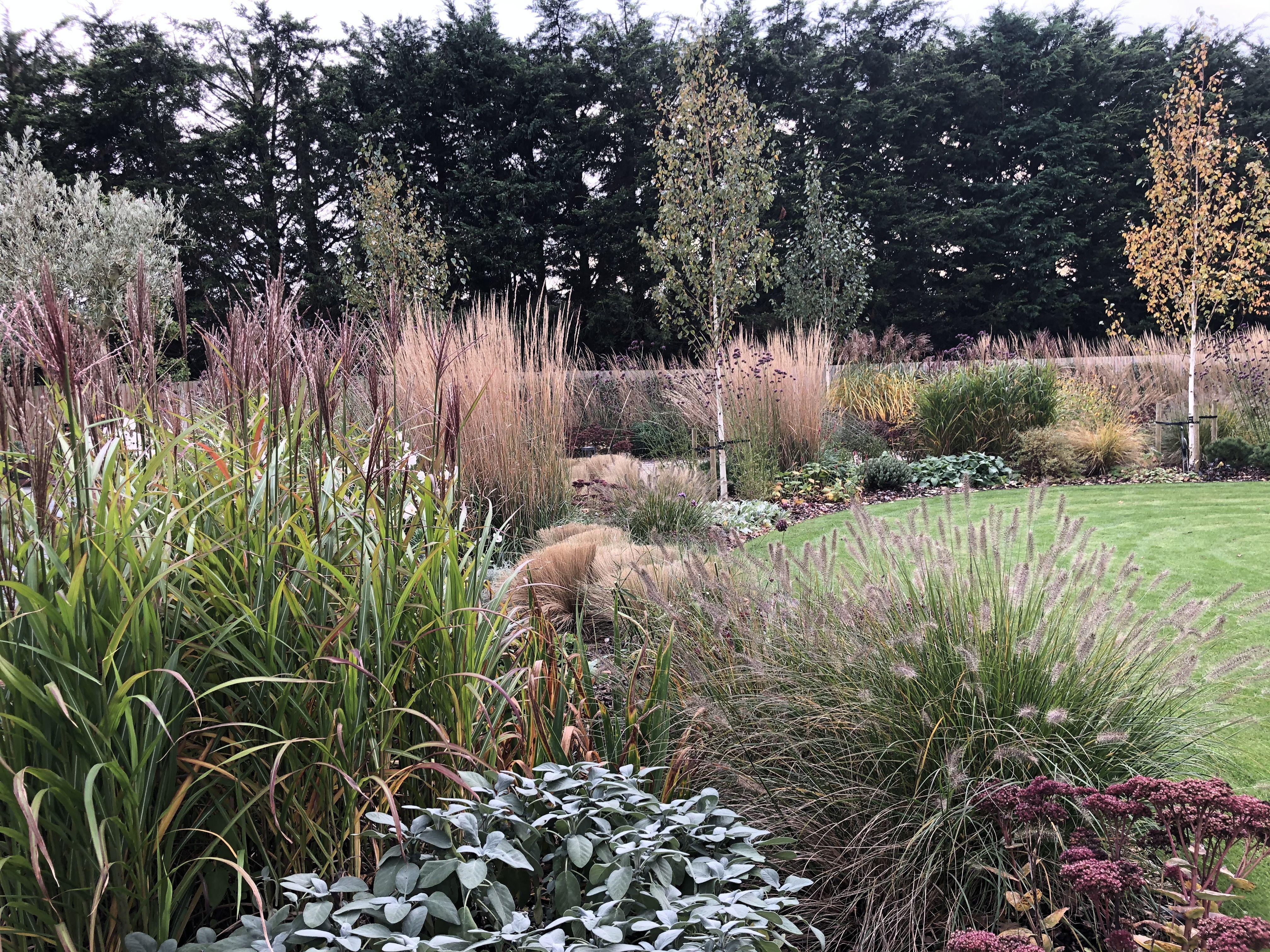Garden Design Hertfordshire- Grasses Take Centre Stage ...
