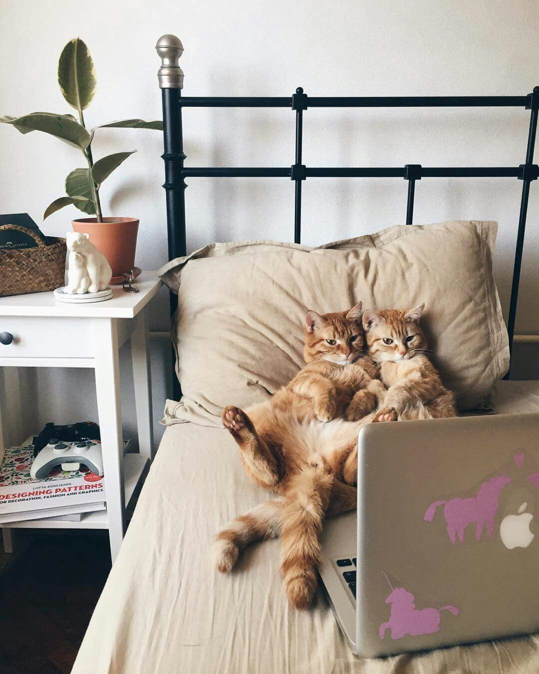 Netflix And Chill Cats Kittens Cute Cats