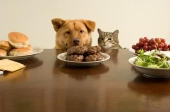 Learn the signs, symptoms and difference of diabetes in dogs and cats and why pets are at high risk for obesity when they overeat. http://healthypets.mercola.com/sites/healthypets/archive/2010/06/02/is-your-pet-eating-too-much-then-theyre-high-tisk-for-ths.aspx