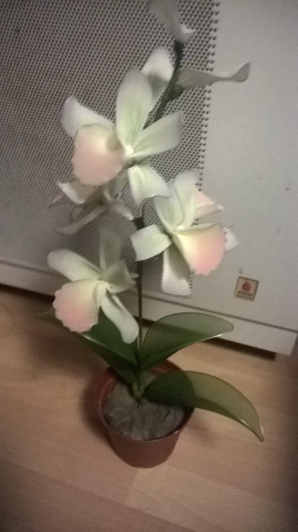 orchidea 4 variáns