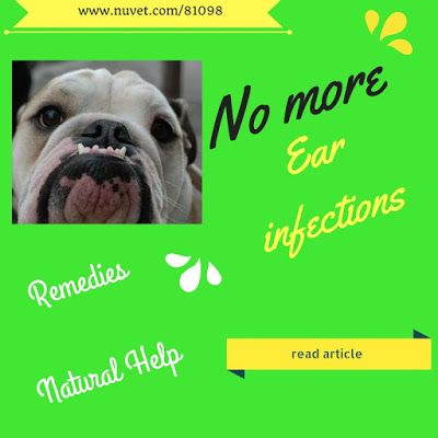 Finally A Remedy For Yeast Ear Infections In Your Dog Ear