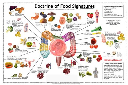 Image result for foods that resemble organs   Health heal ...