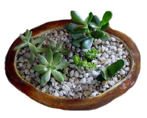 Planta de jade con cuarzo feng shui balance pinterest for Plantas para interiores feng shui