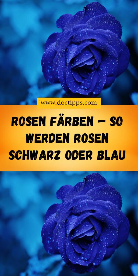 Rosen Farben So Werden Rosen Schwarz Oder Blau Rosen Farbe Rose Blaue Rosen