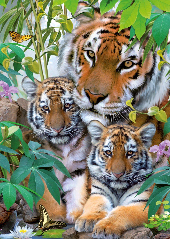 Puzzle famille tigre ravensburger 19117 1000 pi ces - Images tigres gratuites ...