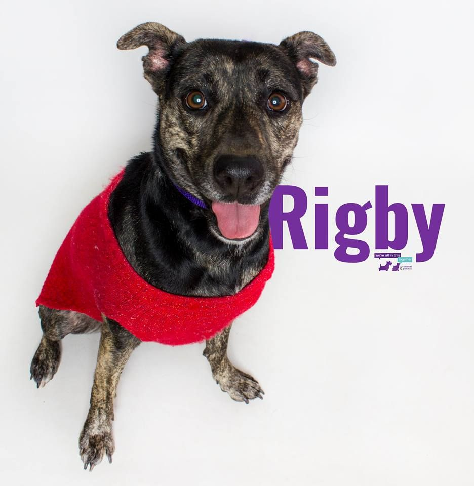 Hi I M Rigby I M A Shy 1 Year Old Girl Who Is Ready To Find My Fur Ever Home Once I Get To Know You I M Very Sweet Check Ou Pets 1