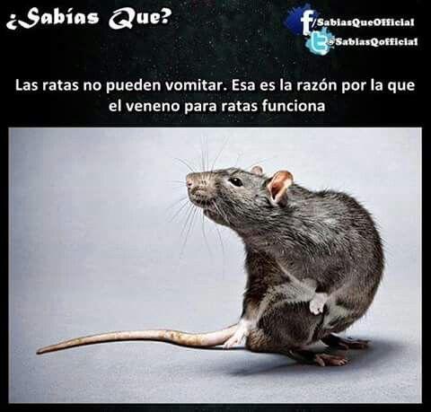 Ratas.