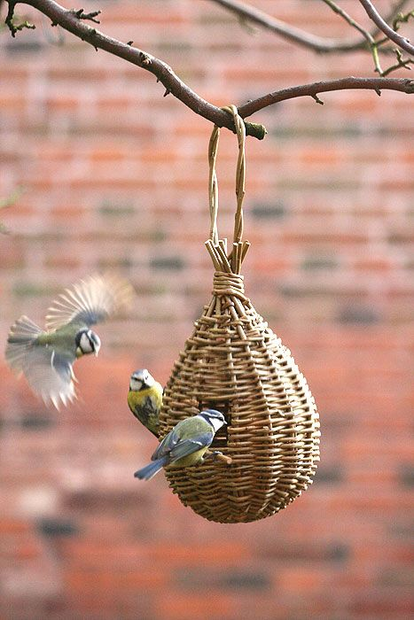 'Teardrop Feeder' willow craft project - As featured in book: Willow Craft 10 Bird Feeder Projects #birdhouses