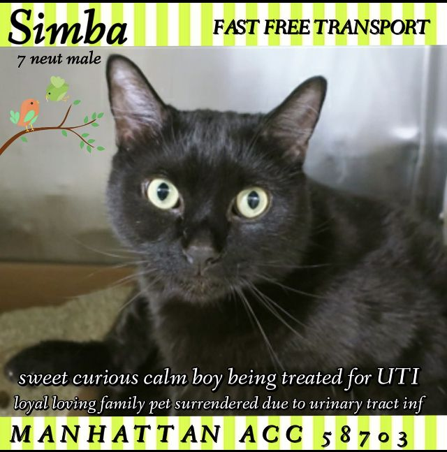 Simba Rescued 04 09 19 To Die 04 09 19 Cat Entertainment Cats Pets