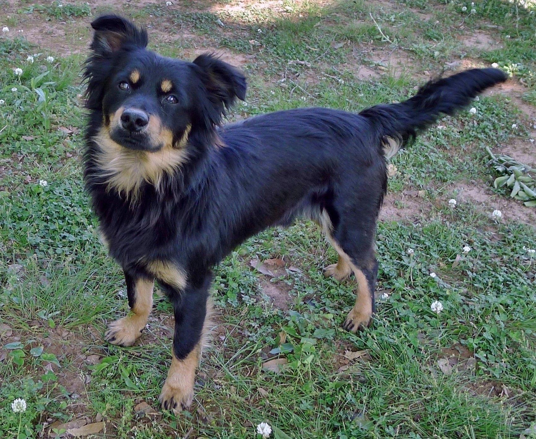 Adopt Kansas on Dog adoption, Beautiful dogs, Pet search