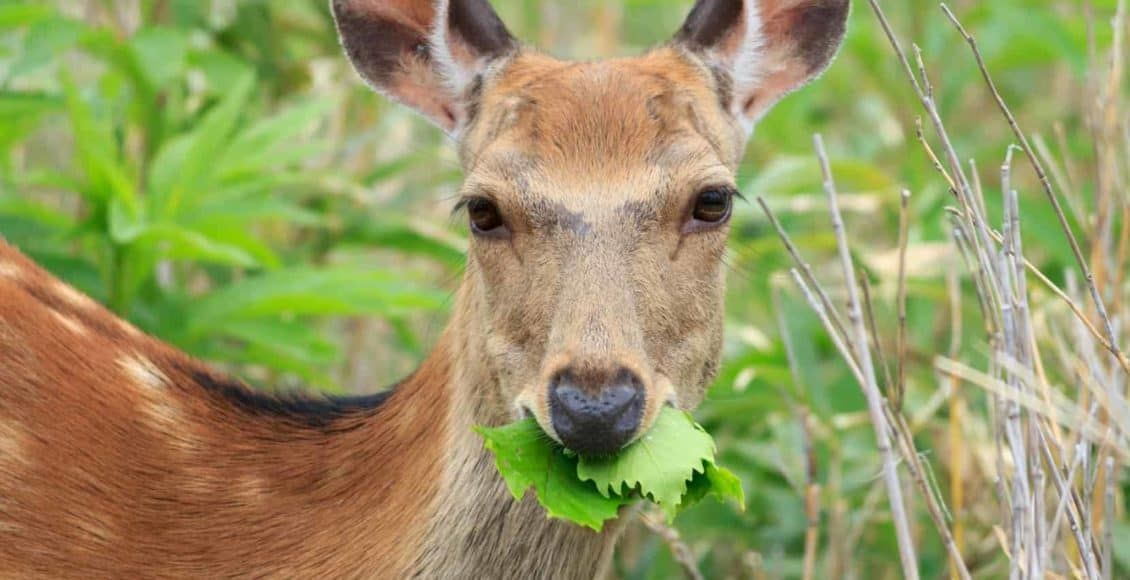 how to keep animals from eating vegetable garden