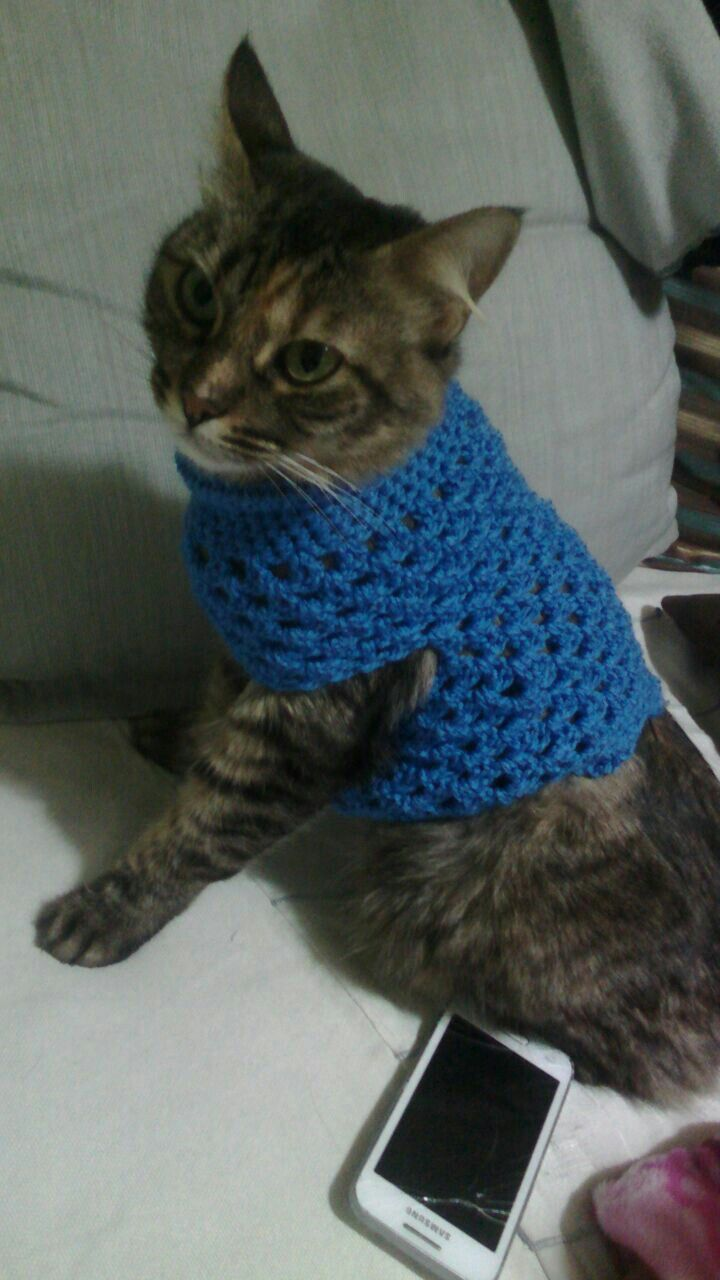 Crochet cat sweater (With images) Cat sweaters, Cat