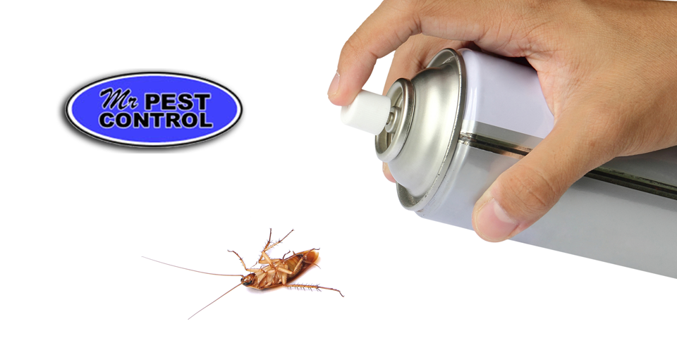 Having problems with cockroaches in the kitchen? Read