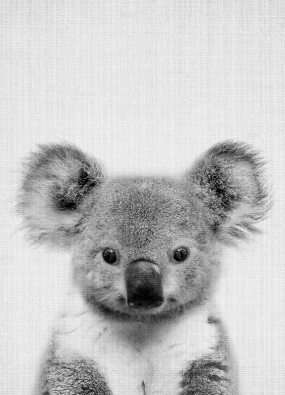Print 67 By Lila X Lola Koala Black White Photograph Animals Black White Koalas Nursery Artforkids Wildanimals Whi Koala Drawing Koala Koala Bear