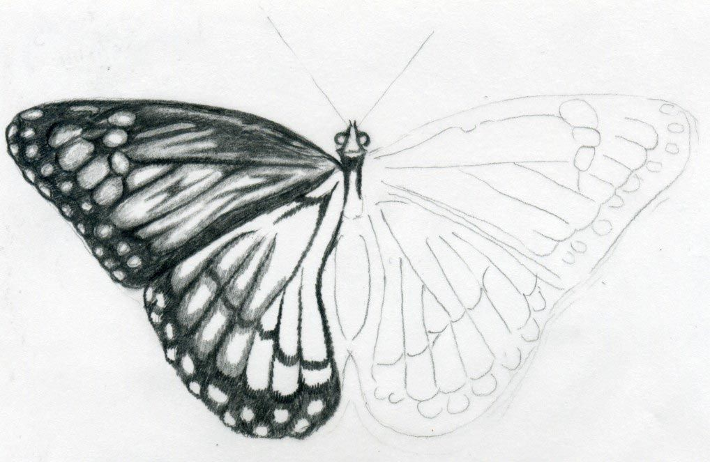 Easy butterfly drawings jus 4 kidz