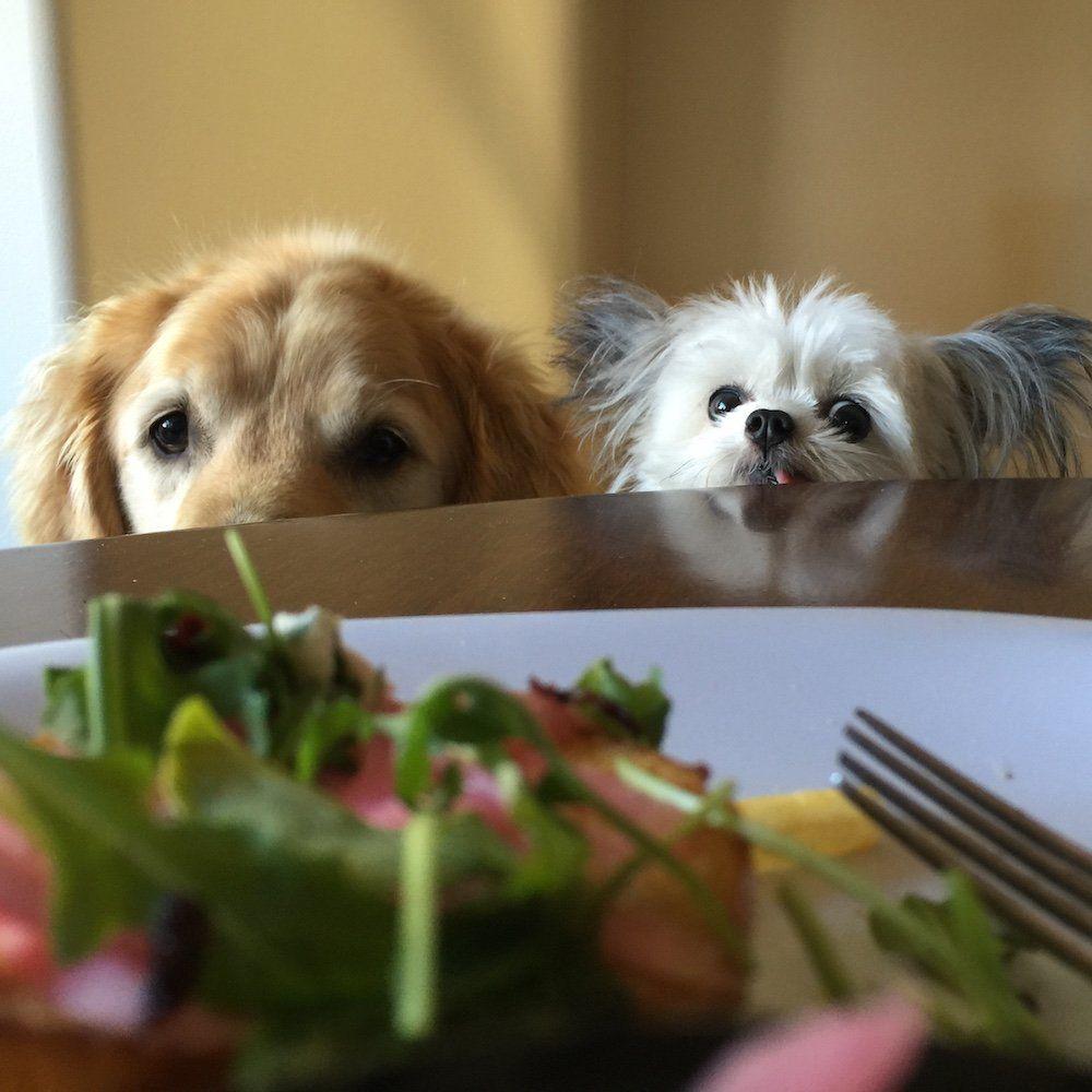 NORBERT on Puppies, Dogs, Animals beautiful