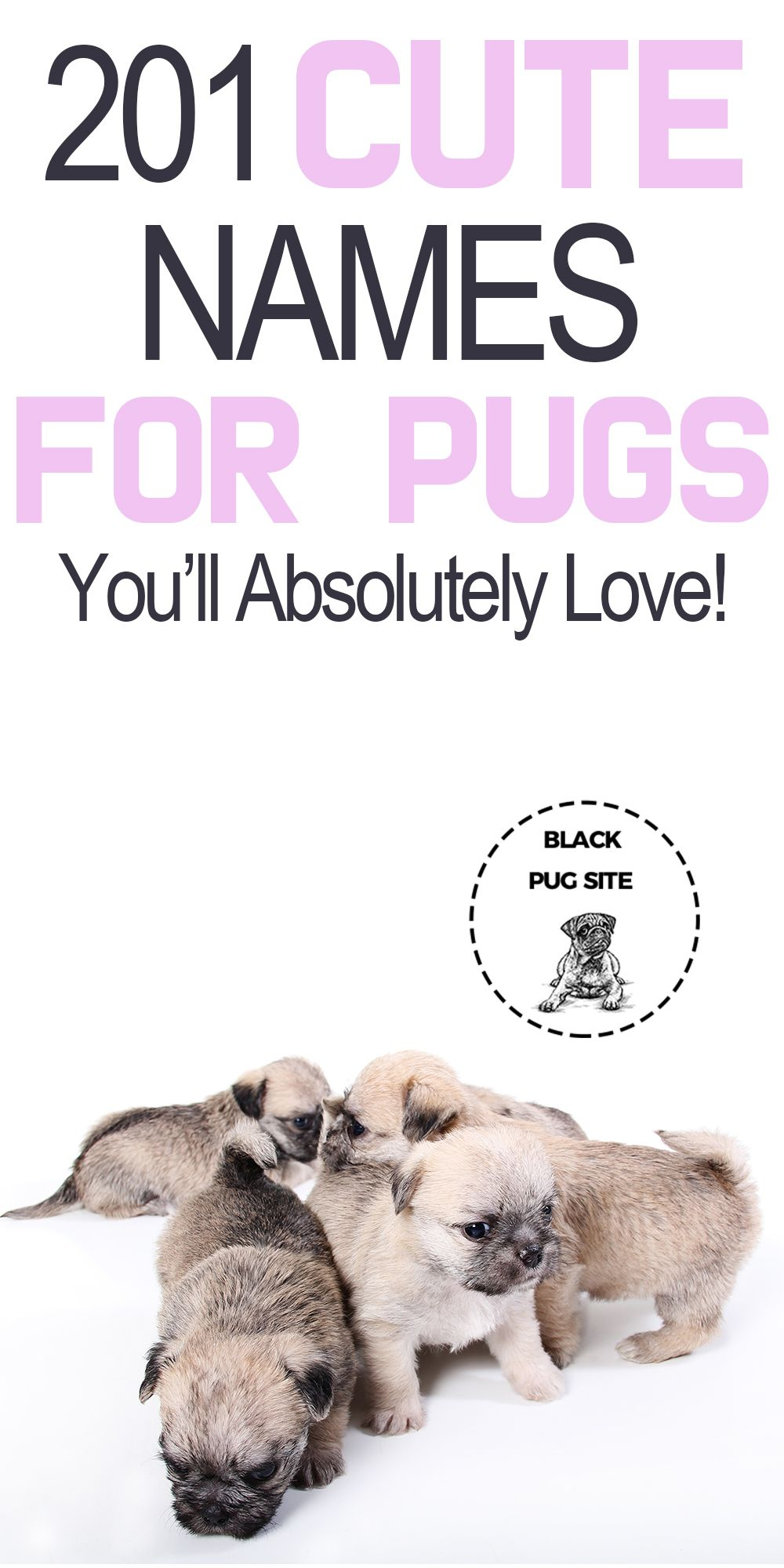Over 200 Cute Pug Names That Will Work For Boys And Girls In 2020