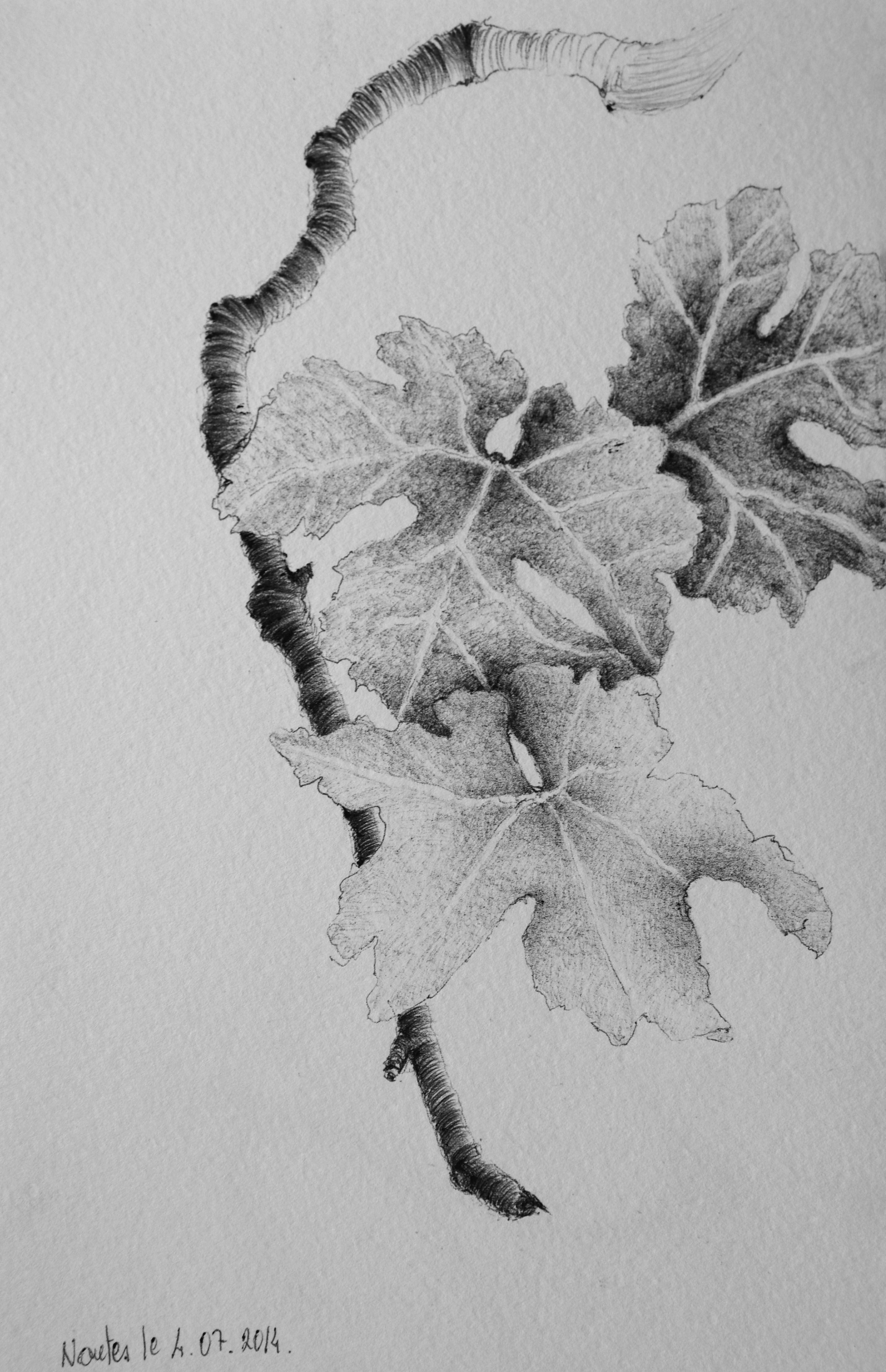 Vigne Jardin Des Plantes 3 Nantes Idées Peinture Vignes