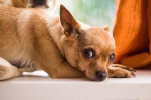 5 Must Know Tips For Taking Care Of Your Dog S Paws Dog Care
