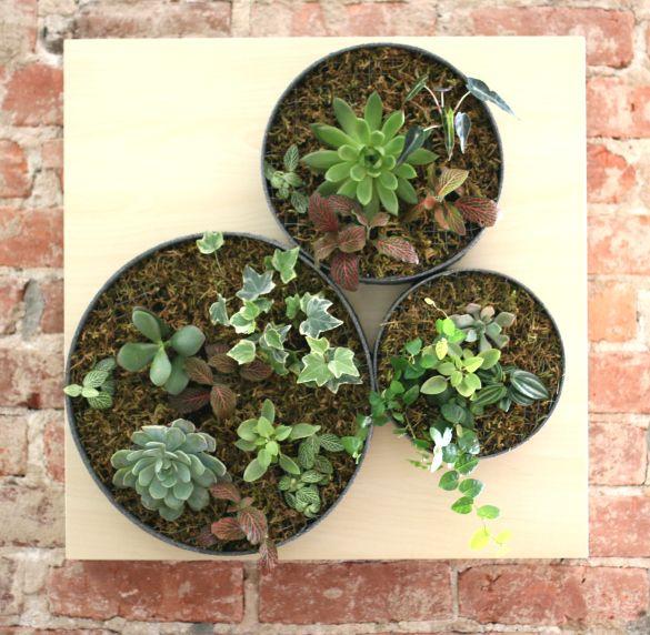 17 Apart: DIY Vertical Succulent Garden: EHowu0027s Ikea Lack Hack  #ProjectThrowdown Challenge