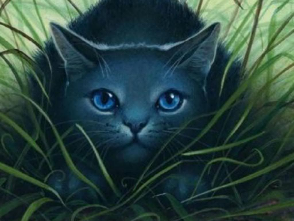 Are You Looking For Attractive And High Definition Warrior Cat