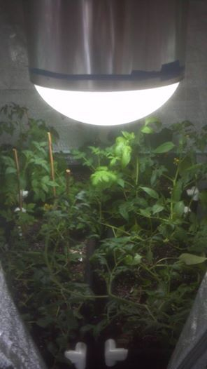 Solar Grow Bringing In Natural Sun Light To Our Indoor