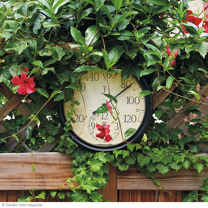 easy vines on privacy fence: potted mandevilla