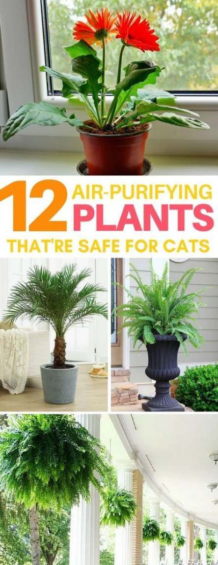 38 New Ideas Plants Apartment Cats