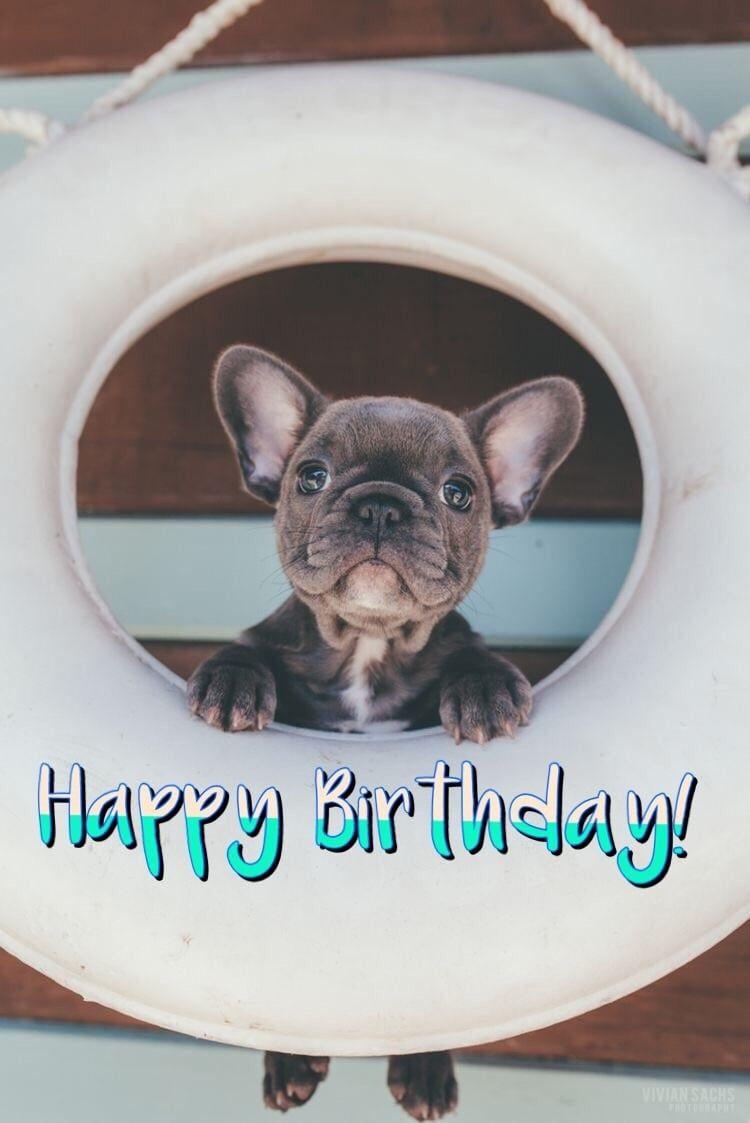 Happy Birthday French Bulldog Happy Birthday French Bulldog