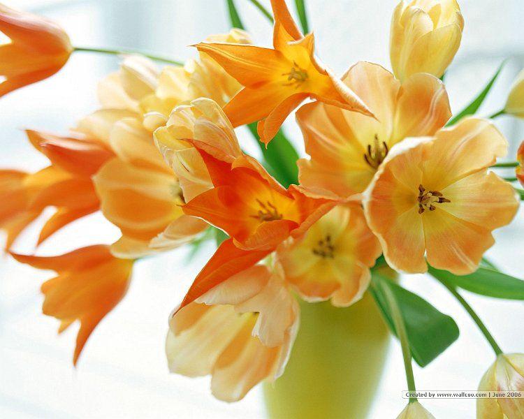 Arabsexweb online com | Flowers, Tulips flowers, Flower photos