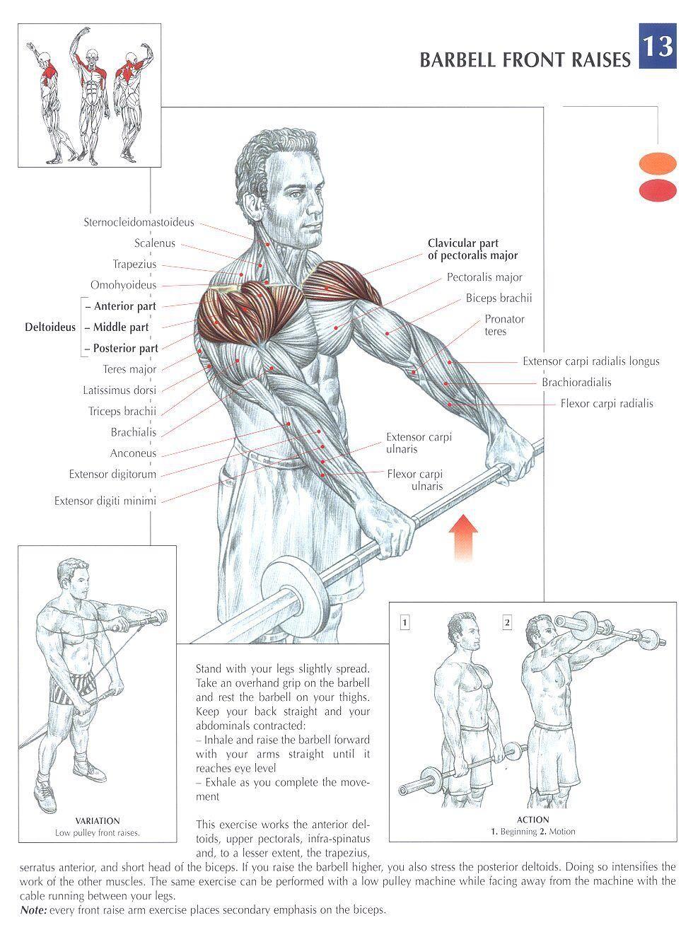 HOMBROS | Anatomía del Ejercicio | Pinterest | Ejercicios, Anatomía ...