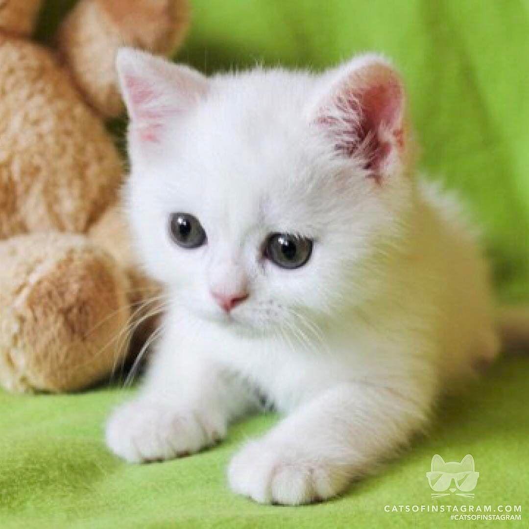 From casperthecattr uccute kitten ud catsofinstagram source