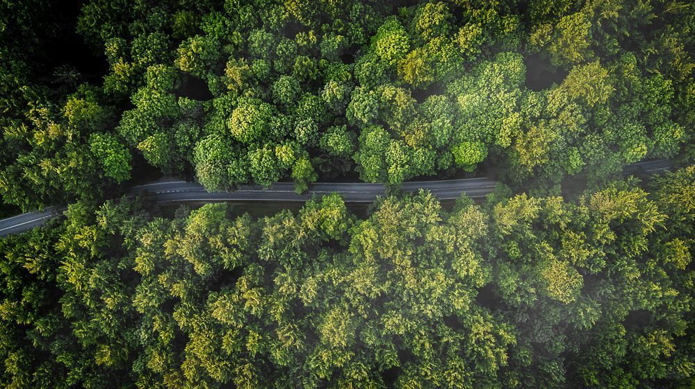 The road Photo by Michael B Rasmussen — National Geographic Your Shot