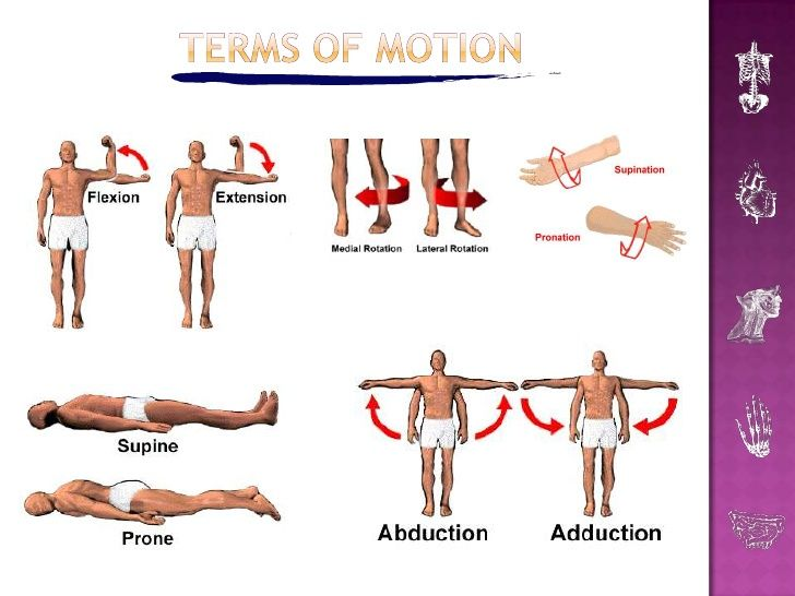 Terms For Human Movement Google Search Physiotherapy Pinterest