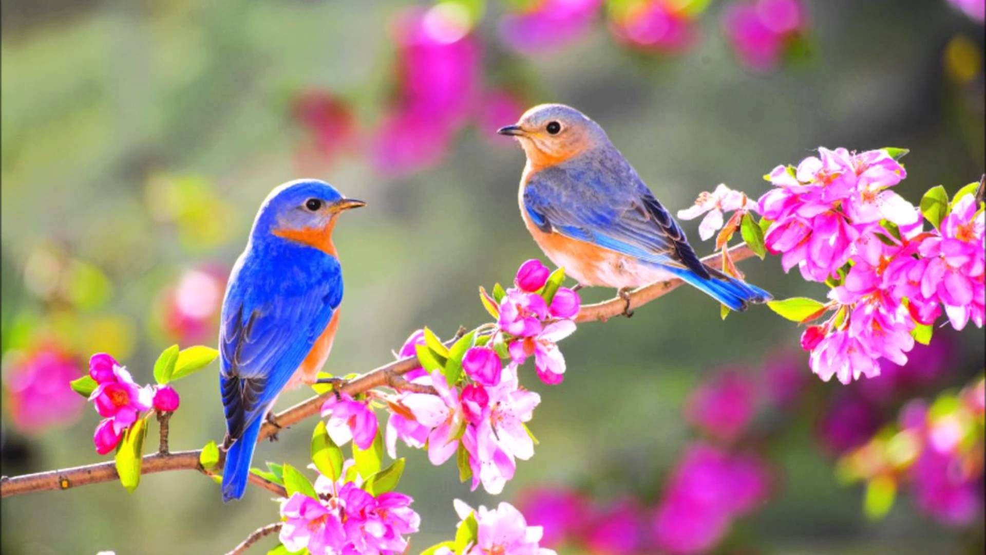 Pin By Soulcare On Soulcare Retreats Pinterest Birds Beautiful