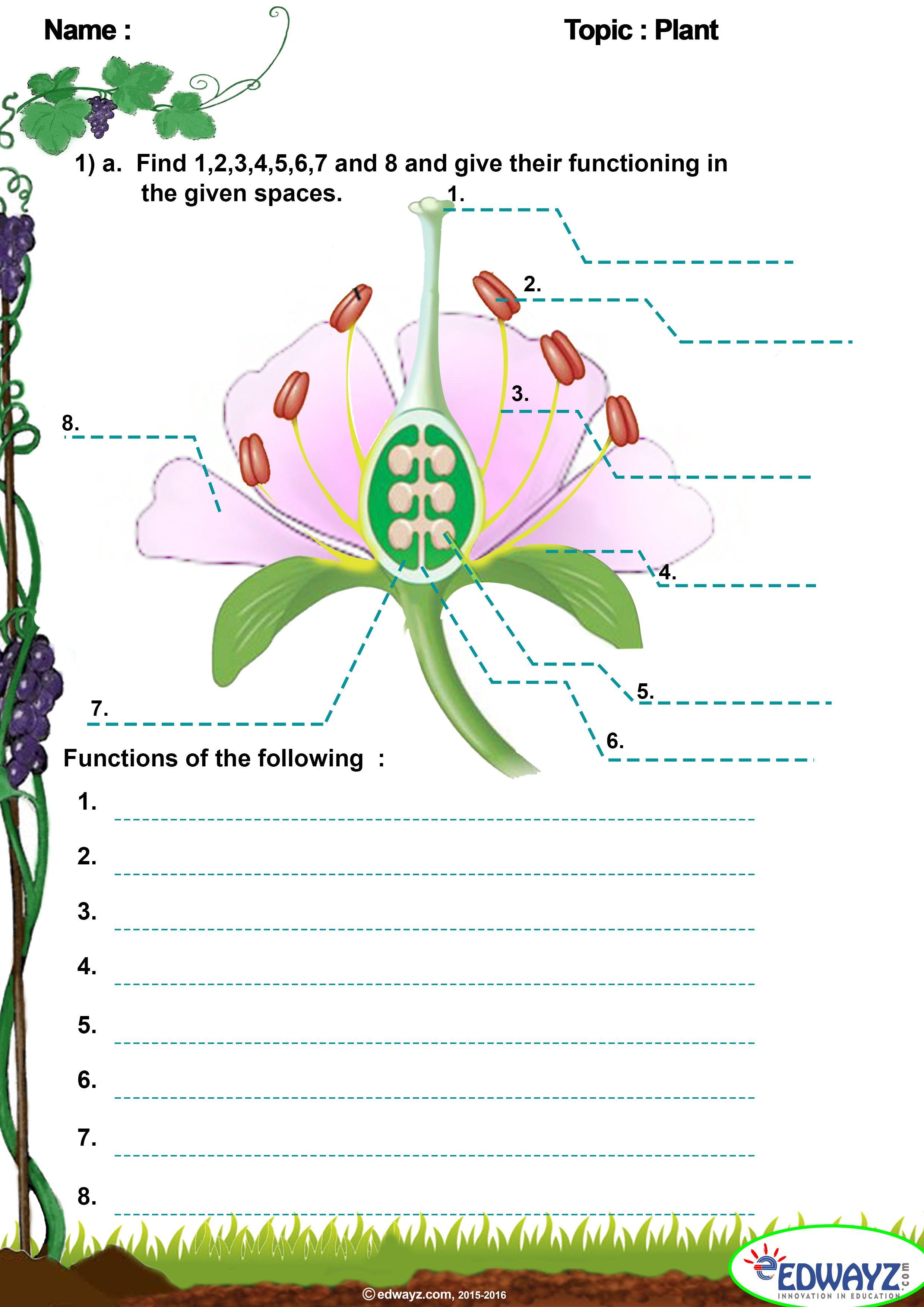 Edwayz freeworksheets Class5 EVS PlantsKingdom