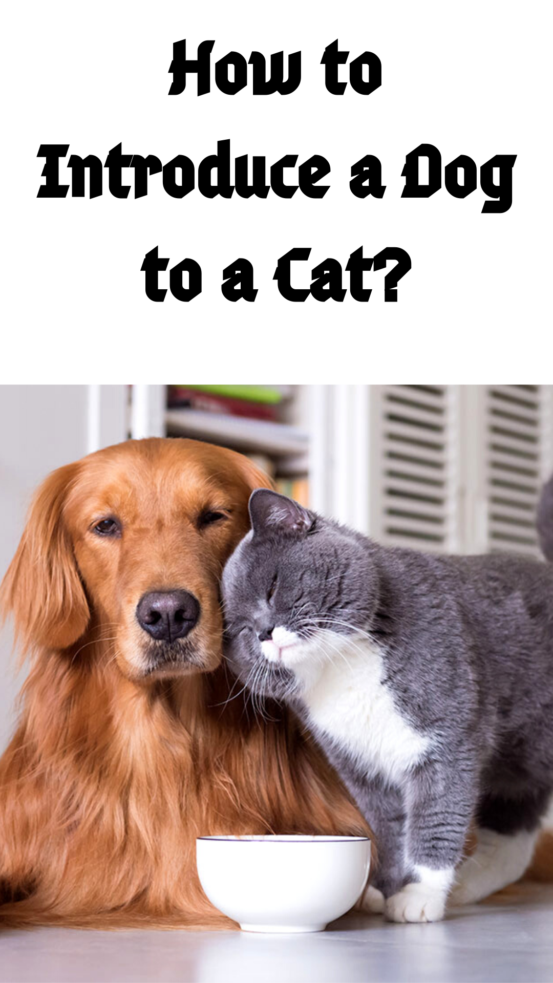 How To Introduce A Dog And Cat Getting Started Make Sure The Cat Has Access To A Dog Free Sanctuary At All Times Keep The Pets Separate A Dogs Cat Care Cats