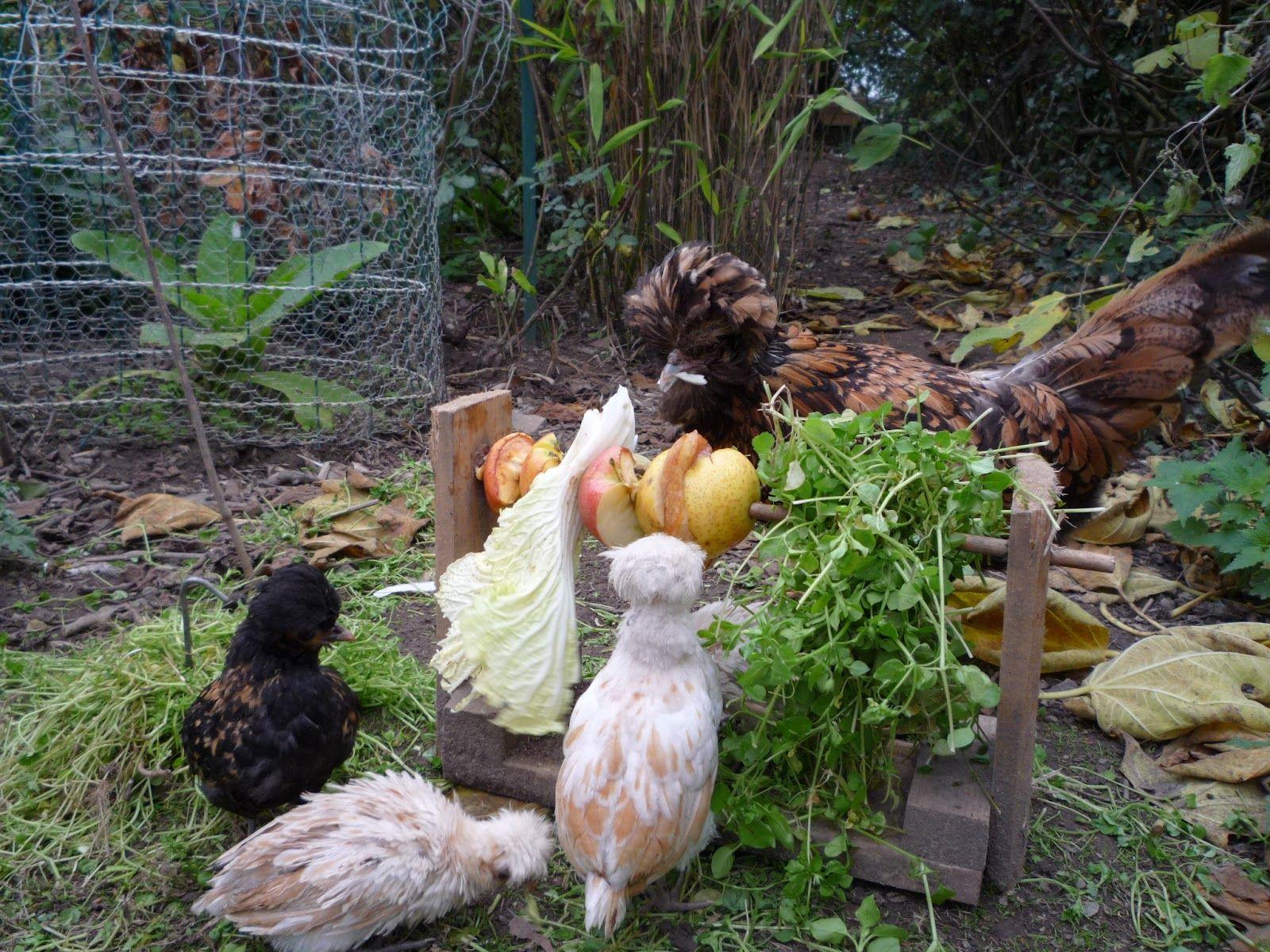 Padovana Chicken
