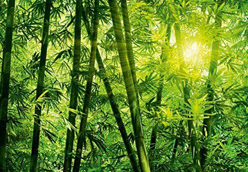 Fototapete - BAMBUSWALD - (123i) Größe 366x254 cm 8-teilig - bambus im wohnzimmer